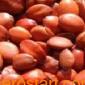 哪里有优质的酸枣仁种子?
